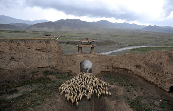 A herder drives his sheep through a gate of the Yongtai ancient town, in Jingtai county, Gansu province, China. Photo by China Daily Photo by Danish Siddiqui